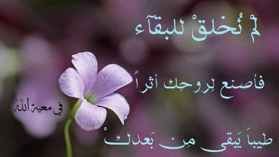 صورة اجمل الصور والعبارات الدينية 2490 7