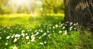 صورة كلمات عن الطبيعة 11546 13 310x165