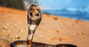 انواع الثعابين , مش مصدقة كل الانواع دي موجودة